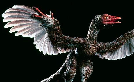 090331-03-archaeoraptor_big